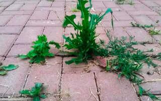 Как избавиться от сорняков между тротуарной плиткой